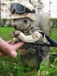 23-military-squirrel